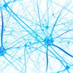 Neurons show how functional neurology can help treat concussions